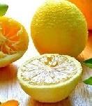 lemon-01.jpg
