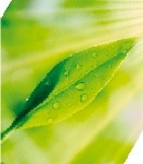 green tea2-01.jpg